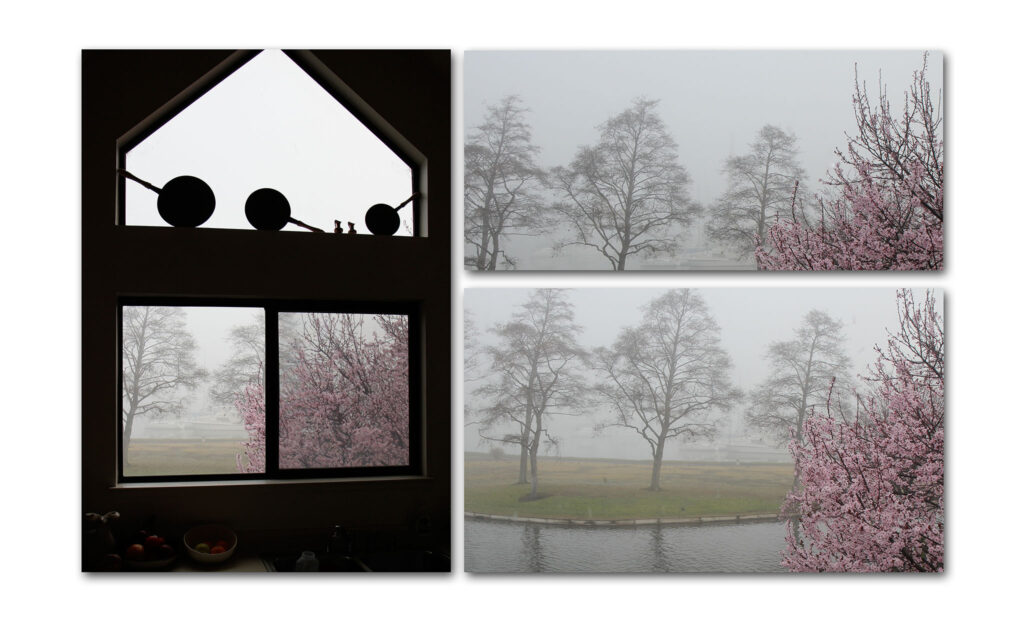 Cherry Trees and Fog